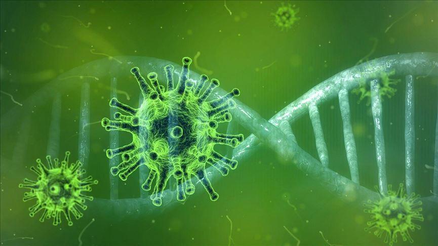 نانواسفنجی که ویروس کرونا را به دام می اندازد